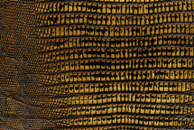 Lizard Skin Teju BCBL Metallic Storm Gold