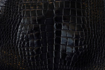 Alligator Skin Belly Glazed Black 35/39 cm Grade 3