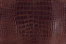 Alligator Skin Belly Glazed Bourbon 35/39 cm Grade 3