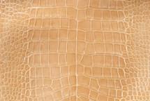 Alligator Skin Belly Glazed Buttercup 35/39 cm Grade 3