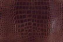 Alligator Skin Belly Glazed Bourbon 40/44 cm Grade 2