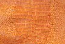 Alligator Skin Belly Glazed Mustard 40/44 cm Grade 4