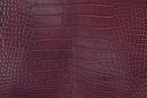 Alligator Skin Belly Glazed Bordeaux 45/49 cm Grade 3