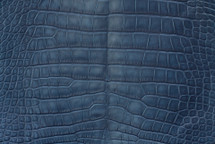 Alligator Skin Belly Matte Marine 40/44 cm Grade 4