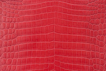 Alligator Skin Belly Matte Red 40/44 cm Grade 4