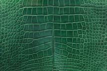 Alligator Skin Belly Millenium Pine 30/34 cm Grade 4