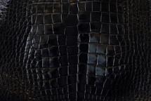 Nile Crocodile Skin Belly Glazed Black 35/39 cm Grade 3