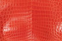 Nile Crocodile Skin Belly Glazed Tangerine 35/39 cm Grade 3