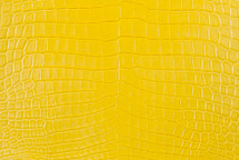 Nile Crocodile Skin Belly Matte Yellow 30/34 cm Grade 4
