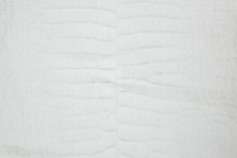 Alligator Skin Belly Crust 55/59 cm Grade 3