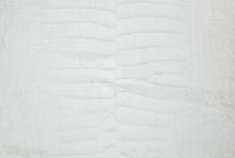 Alligator Skin Belly Crust 40/44 cm Grade 4