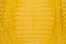 Caiman Skin Belly Matte Yellow
