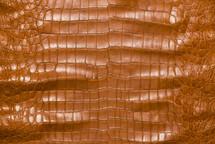 American Crocodile Skin Belly Matte Cognac 50/54 cm Grade 3