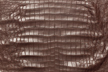 American Crocodile Skin Belly Matte Wine 50/54 cm Grade 3