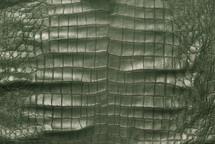 American Crocodile Skin Belly Matte Green 50/54 cm Grade 3