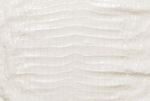 American Crocodile Skin Belly Matte White 50/54 cm Grade 3