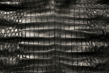American Crocodile Skin Belly Matte Black 50/54 cm Grade 4