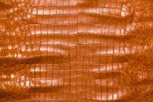 American Crocodile Skin Belly Matte Cognac 50/54 cm Grade 4