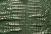 American Crocodile Skin Belly Matte Green 50/54 cm Grade 4