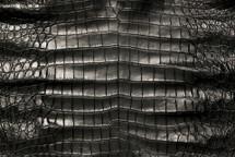 American Crocodile Skin Belly Garment Black 50/54 cm Grade 3