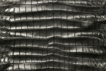 American Crocodile Skin Belly Matte Charcoal 55/59 cm Grade 4