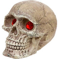 Penn-Plax Skull Grazer Ornament Mini Assorted