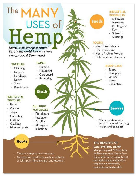 The many uses of hemp - Canada Hemp Foods