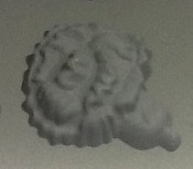 Carnation Rubber Candy Mold