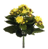"KALANCHOE BUSH MINI 9"" YELLOW TWO-TONE"