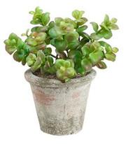 "JADE PLANT IN CLAY POT 8"""