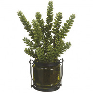 SUCCULENT DONKEY TAIL IN GLASS VASE 12""