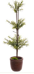 TOPIARY  MYRTLE 26""
