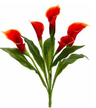 CALLA LILY BUSH OR 24""