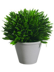 OLIVE LEAF BALL TOPIARY 10""