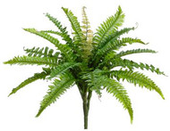 "BOSTON FERN BUSH 16"" X19"