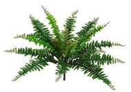 BOSTON FERN BUSH 15.5 X21 GR