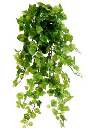 IVY HANGING BUSH 24""