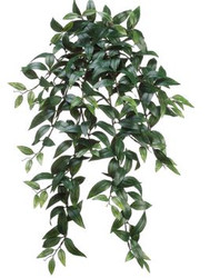 RUSCUS HANGING BUSH 31""
