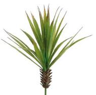 """YUCCA PLANT MINI GR 17"""""""