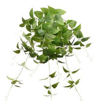 CLEMATIS LEAF BUSH GR 30""