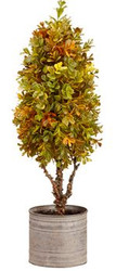 TOPIARY BOXWOOD IN TIN POT  GOLDEN/GREEN 22'