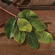 MAGNOLIA LEAF SPRAY 17""
