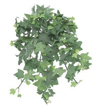 MINI ENGLISH IVY BUSH