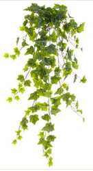 IVY BUSH HEDERA ONE-PE 191L 34""
