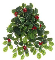 HOLLY HANGING BUSH 21""