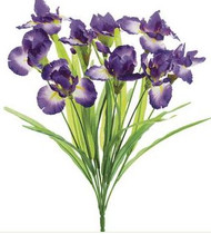 IRIS BUSH X9 PURPLE 12""