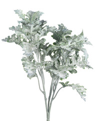 DUSTY MILLER BUSH 17""