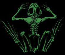 Frogbones