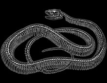 Snake Bones