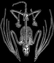 Bat Bones T-Shirt